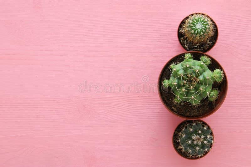 Vista superior del cactus sobre fondo del rosa en colores pastel fotos de archivo libres de regalías