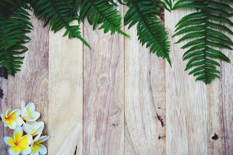 Vista superior del fondo verde del detalle de la textura del helecho y de la flor, concepto del fondo de la decoración del balnea imágenes de archivo libres de regalías