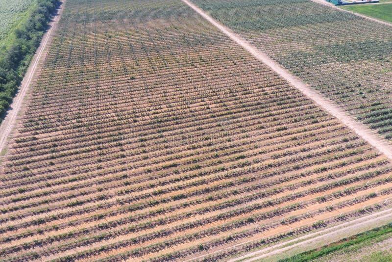 Vista superior del jardín de la manzana enana imagenes de archivo