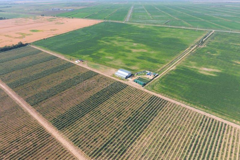 Vista superior del jardín de la manzana enana imagen de archivo libre de regalías