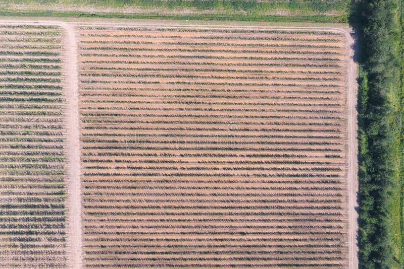 Vista superior del jardín de la manzana enana foto de archivo