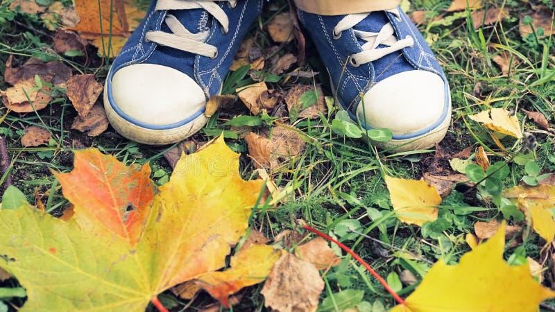 Vista superior del ` s del niño que camina el zapato que camina en las hojas, para los temas del otoño, reconstrucción, exploraci foto de archivo libre de regalías