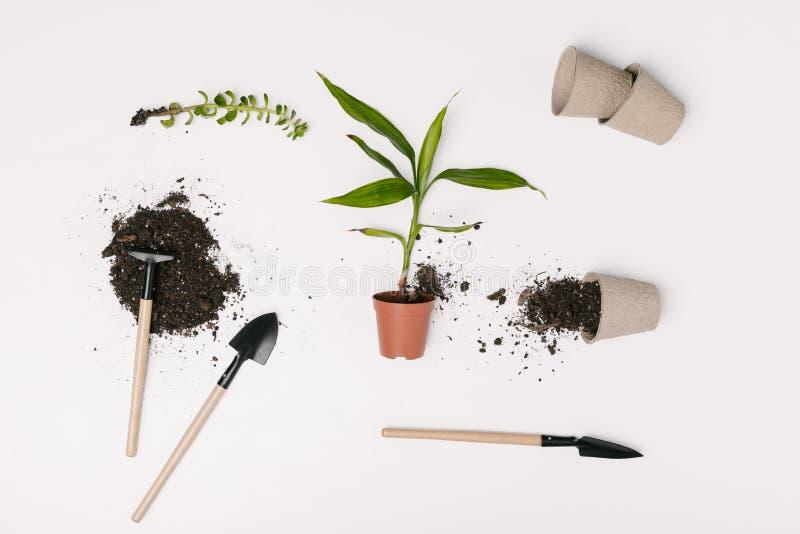 vista superior do equipamento de jardinagem arranjado, dos vasos de flores e de plantas verdes fotografia de stock