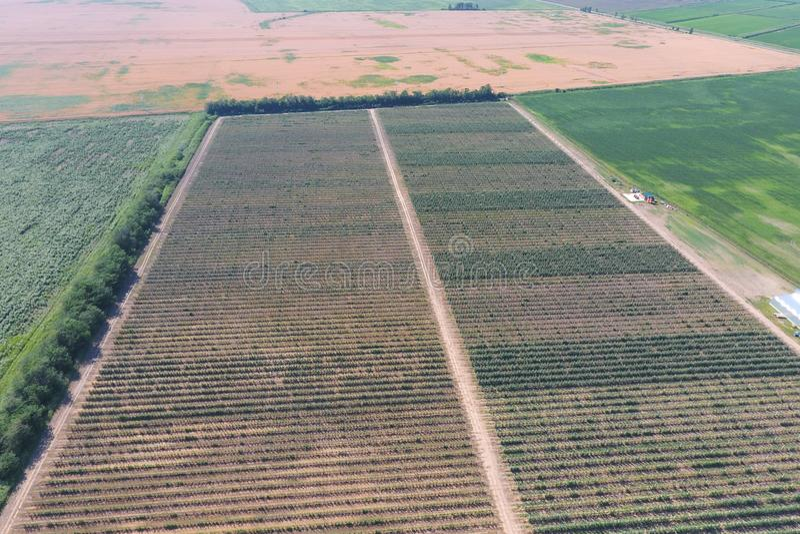 Vista superior do jardim da maçã do anão foto de stock