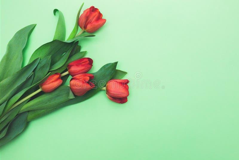 Vista superior do primeiro ramalhete da mola de tulipas vermelhas na luz - fundo verde com espaço da cópia fotos de stock royalty free