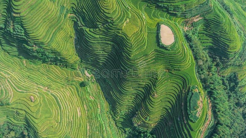 Vista superior do terraço do arroz de Longji fotografia de stock royalty free