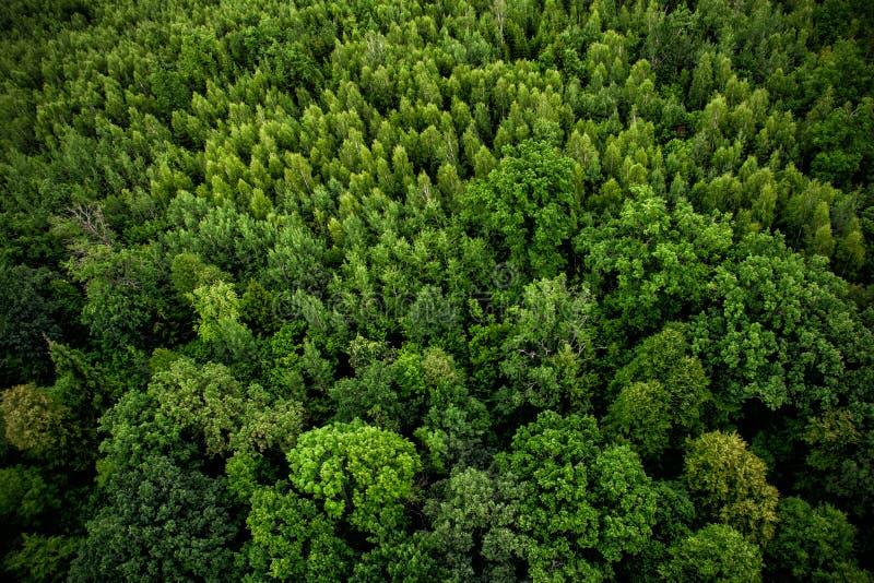 Vista superior do zangão à floresta imagens de stock royalty free