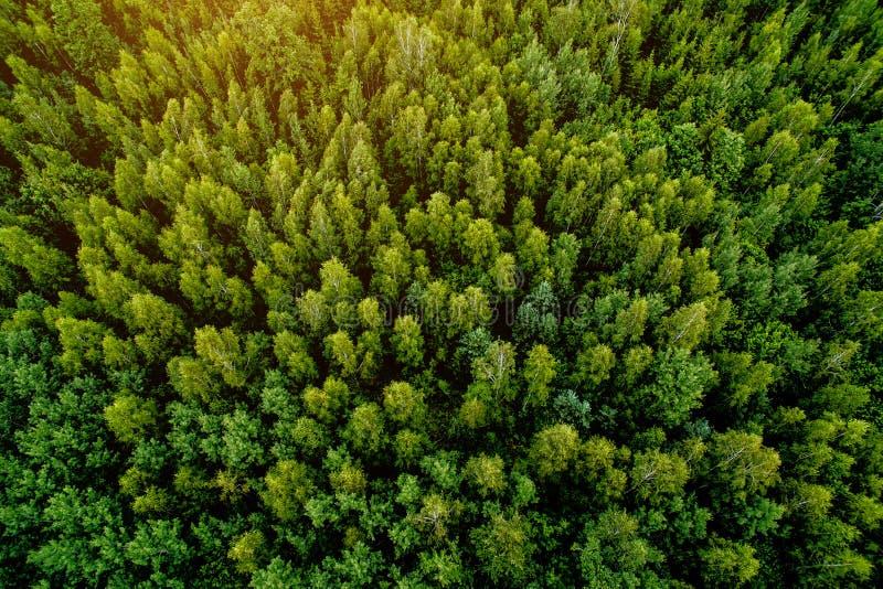 Vista superior do zangão à floresta fotos de stock