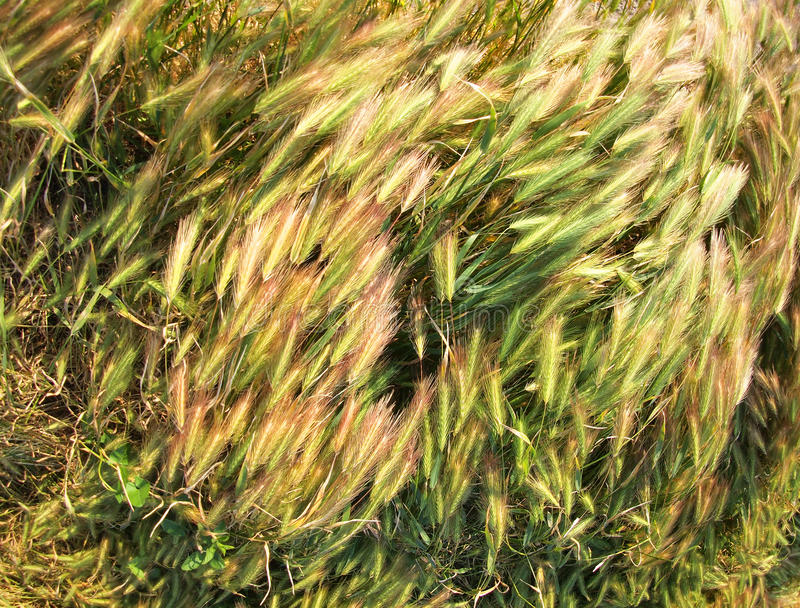 Vista superior na grama seca do gramado fotografia de stock royalty free
