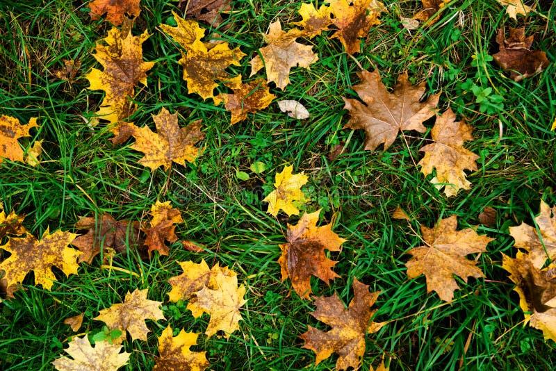 Vista superior na grama verde com folhas de outono foto de stock royalty free