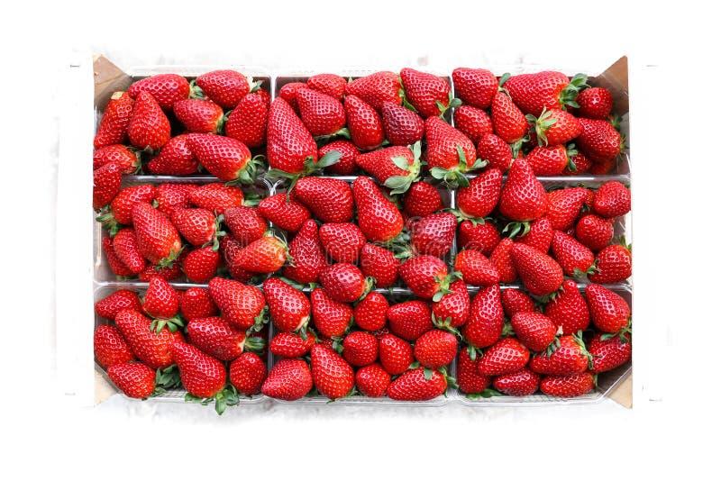 Vista superior no fileiras dos pacotes das morangos suculentas isoladas no fundo branco fotos de stock royalty free