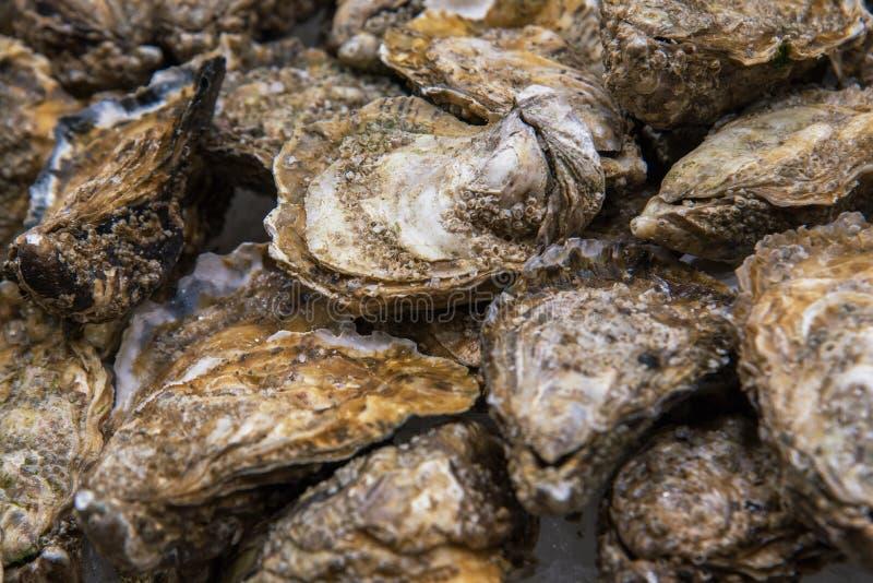 Vista superior no fundo do alimento de ostras fechados inteiras frescas no gelo esmagado fotos de stock
