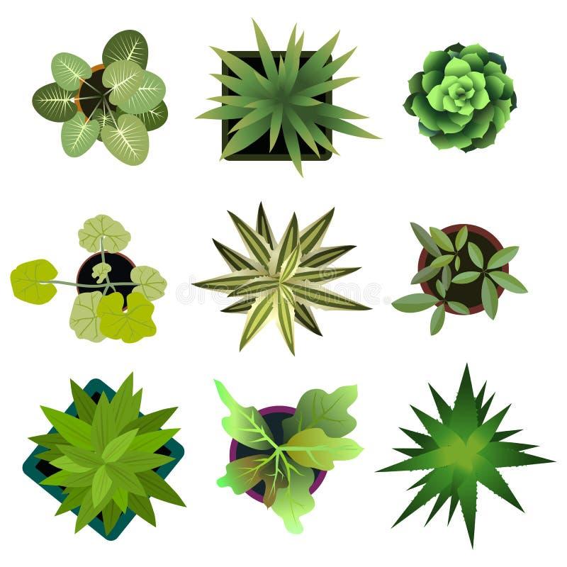 Vista superior pasta fácil da cópia das plantas em seu projetos de design da paisagem ou plano da arquitetura Flores no branco ilustração royalty free