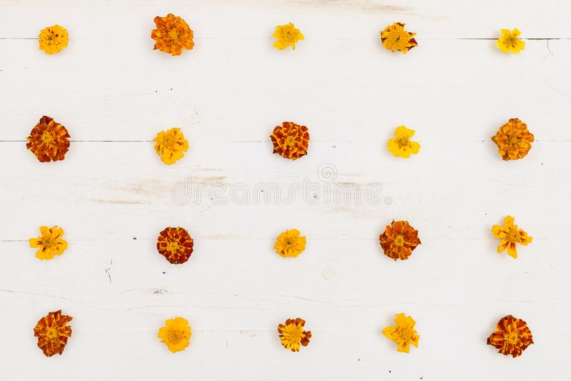 Vista superior sobre Marigolds Tagetes erecta, marigold mexicano, Aztec marigold, African marigold sobre fondo de madera blanca imagen de archivo libre de regalías