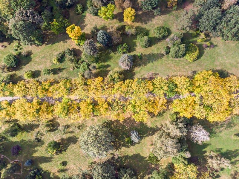 Vista superiore aerea degli alberi e del percorso di camminata nel parco di autunno immagine stock