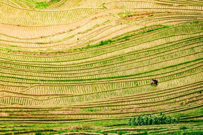 Vista superiore dei terrazzi del riso del Longji di Longsheng a Guilin, Cina fotografie stock libere da diritti
