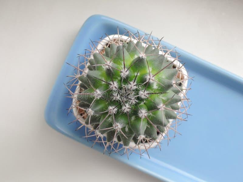 Vista superiore del cactus immagini stock