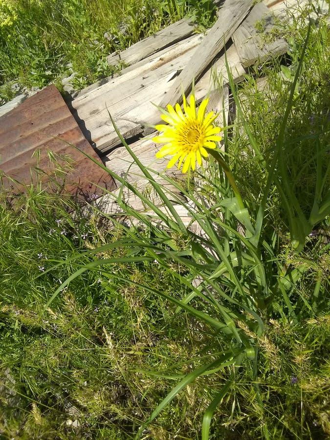 Vista superiore del fiore giallo fotografie stock libere da diritti