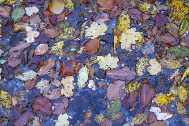 Vista superiore del fogliame colorato multi di autunno dai vari alberi in una pozza dopo la pioggia fotografie stock