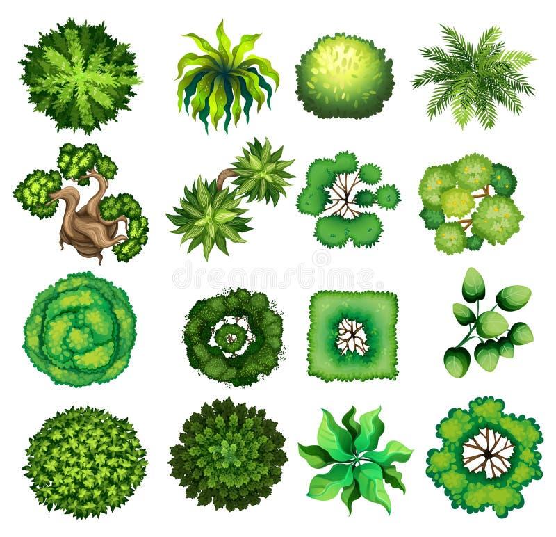 Vista superiore del genere differente di piante illustrazione di stock