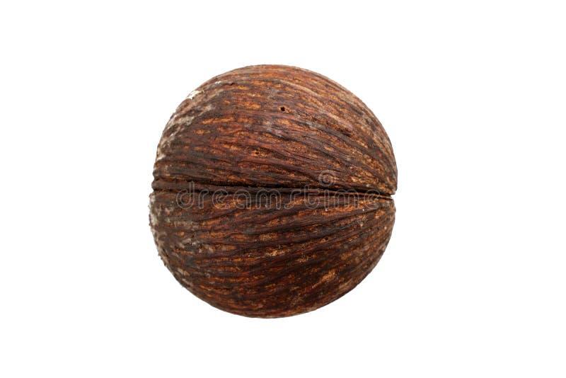 Vista superiore del seme asciutto del odollam di Cerbera o del pong di Pong isolato su fondo bianco fotografia stock