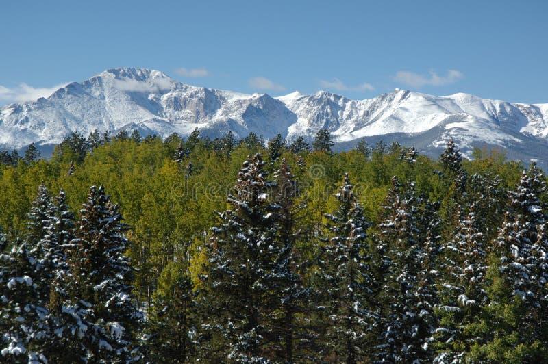 Vista superiore dell'albero fotografia stock