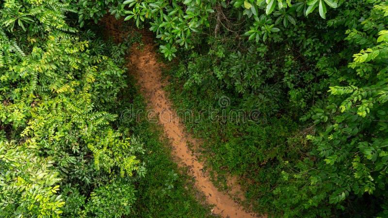 Vista superiore della giungla immagine stock