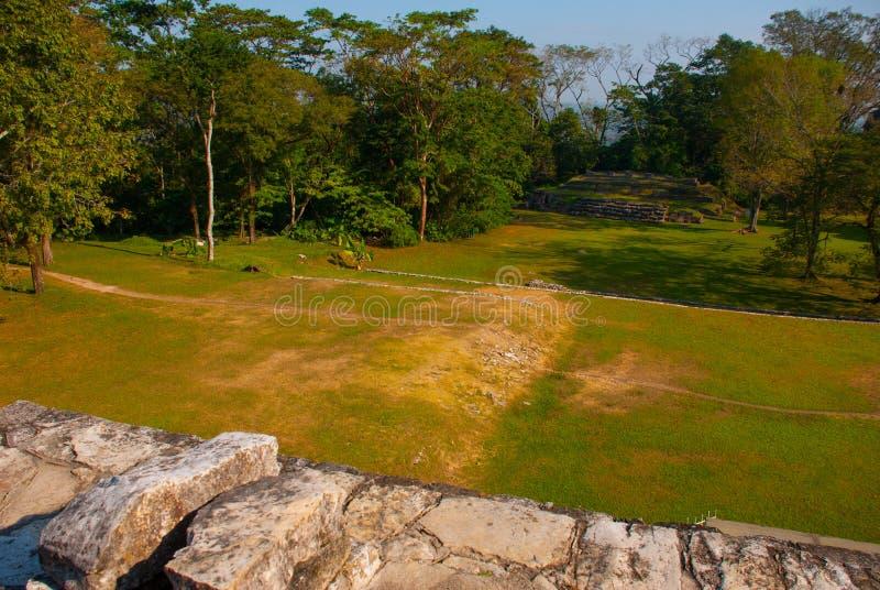 Vista superiore della giungla e della città maya antica Palenque, il Chiapas, Messico fotografia stock libera da diritti