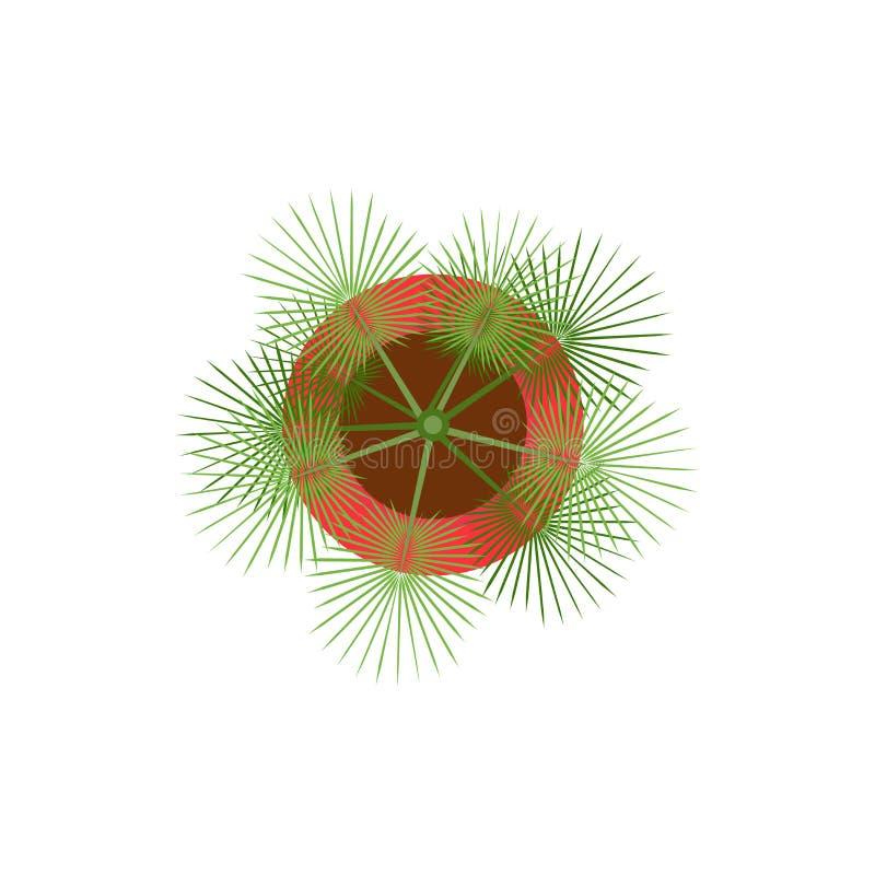 Vista superiore della palma di vettore di progettazione piana verde conservata in vaso dell'illustrazione isolata su bianco royalty illustrazione gratis