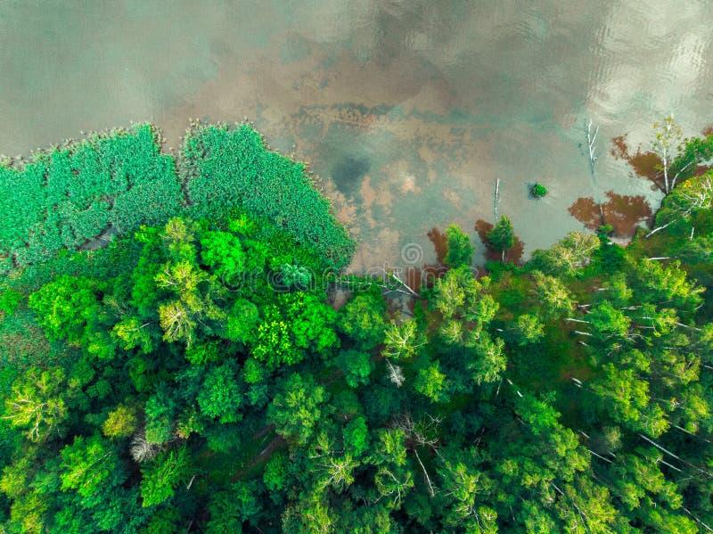 Vista superiore della sponda del fiume e della foresta verde immagine stock