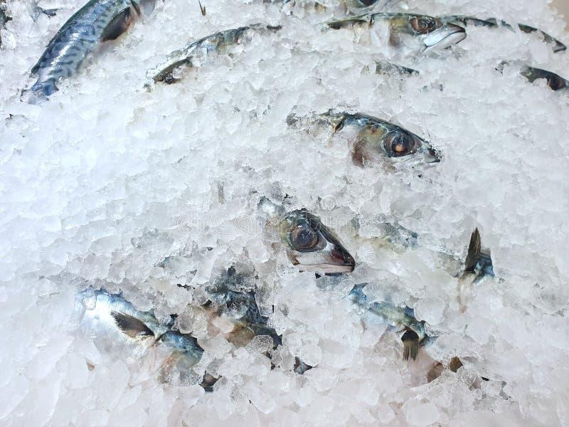 Vista superiore dello sgombro o del saba fresco su ghiaccio da vendere nel mercato ittico alla Tailandia immagini stock