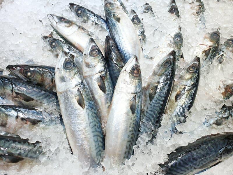 Vista superiore dello sgombro o del saba fresco su ghiaccio da vendere nel mercato ittico alla Tailandia fotografia stock