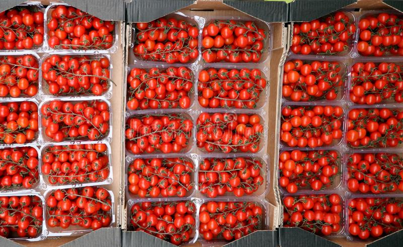 Vista superiore di parecchi recipienti di plastica pieni dei pomodori ciliegia, al mercato di verdure fotografia stock libera da diritti