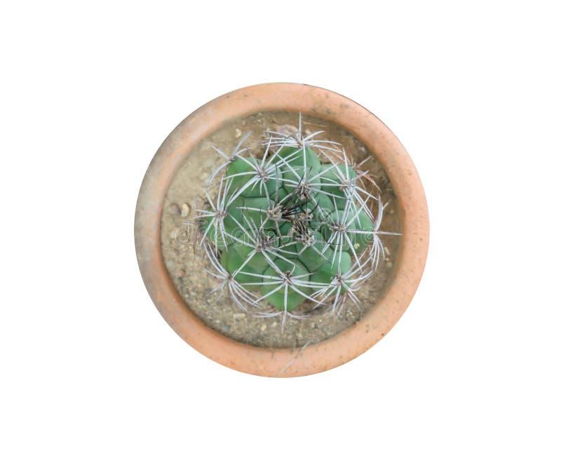 Vista superiore di piccola pianta del cactus nell'isolato del vaso su fondo bianco fotografia stock libera da diritti