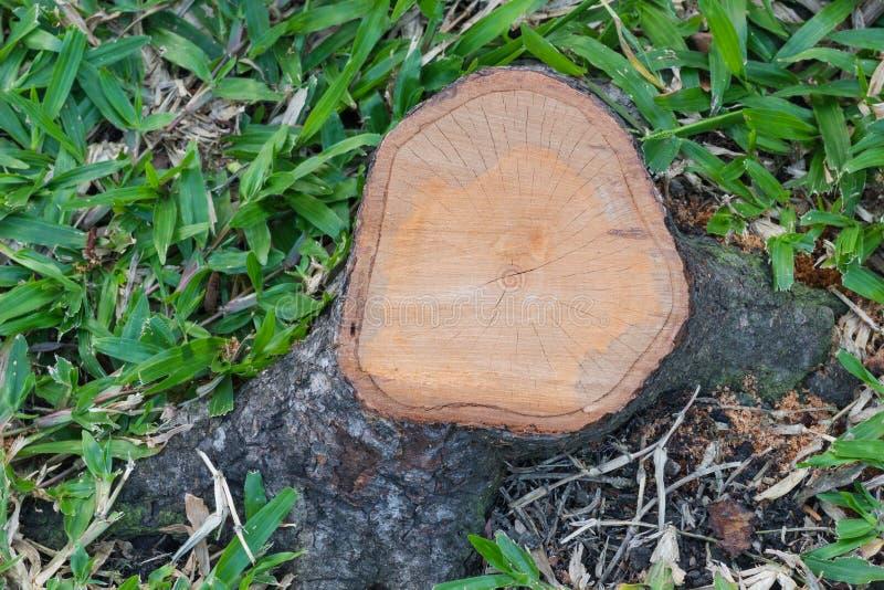 Vista superiore di un ceppo di albero del taglio immagini stock libere da diritti