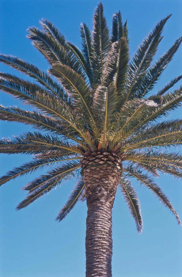 Vista superiore di una palma al sole fotografie stock libere da diritti