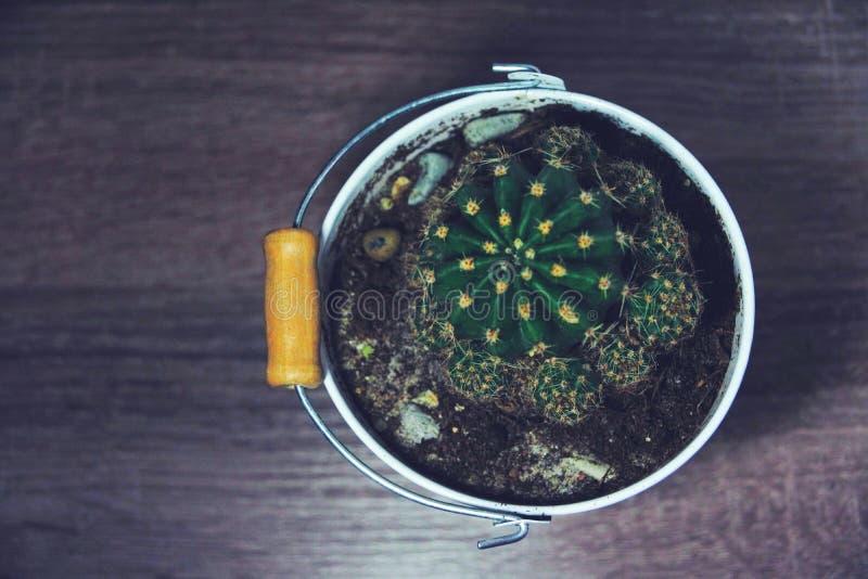 Vista superiore flatlay marrone scura del cactus conservato in vaso d'annata fotografia stock libera da diritti