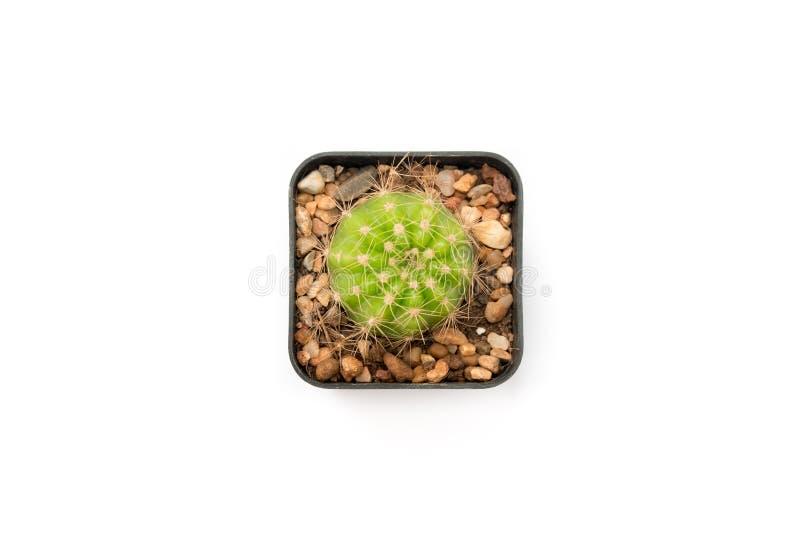 Vista superiore isolata del cactus del cerchio nel vaso quadrato dell'albero fotografie stock libere da diritti