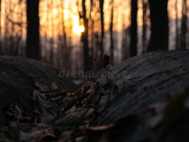 Vista surpreendente e bonita das montanhas nos raios do sol de ajuste imagens de stock