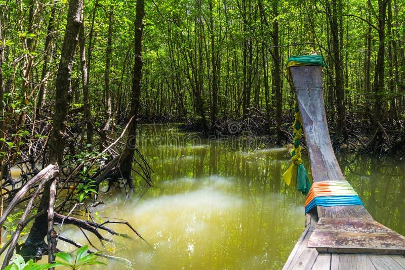 Vista surpreendente quando viagem do barco através da floresta dos manguezais no PR de Krabi imagens de stock
