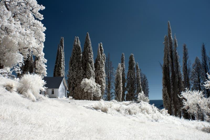 Vista surrealista hermosa de la casa y de los árboles blancos foto de archivo