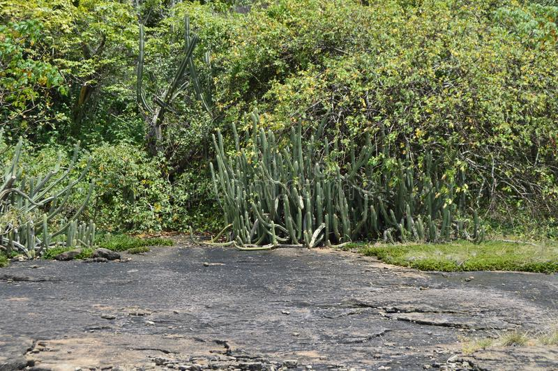 Vista típica del paisaje tropical con la vegetación abundante fotos de archivo