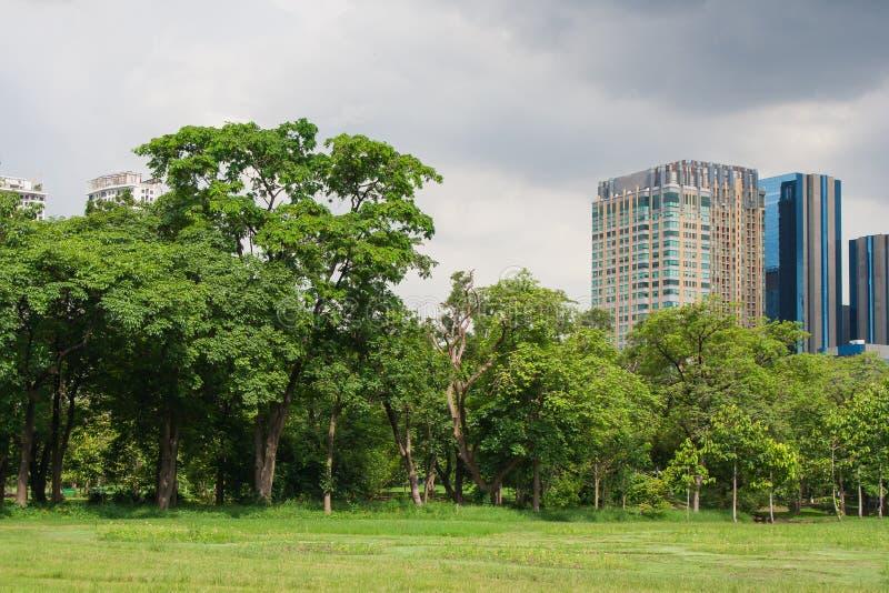 Vista tropical del campo del prado de la hierba verde en parque público con los edificios de la ciudad en el fondo imagenes de archivo
