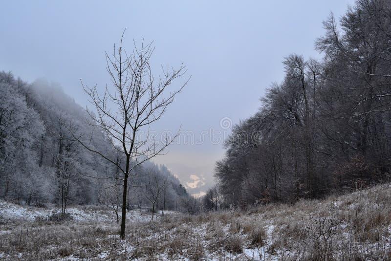 Download Vista A Um Vale Entre árvores No Inverno Imagem de Stock - Imagem de vista, grama: 65575319