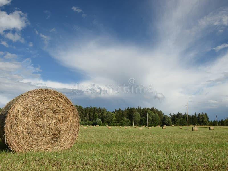 Vista variopinta della bobina con erba sul campo immagine stock