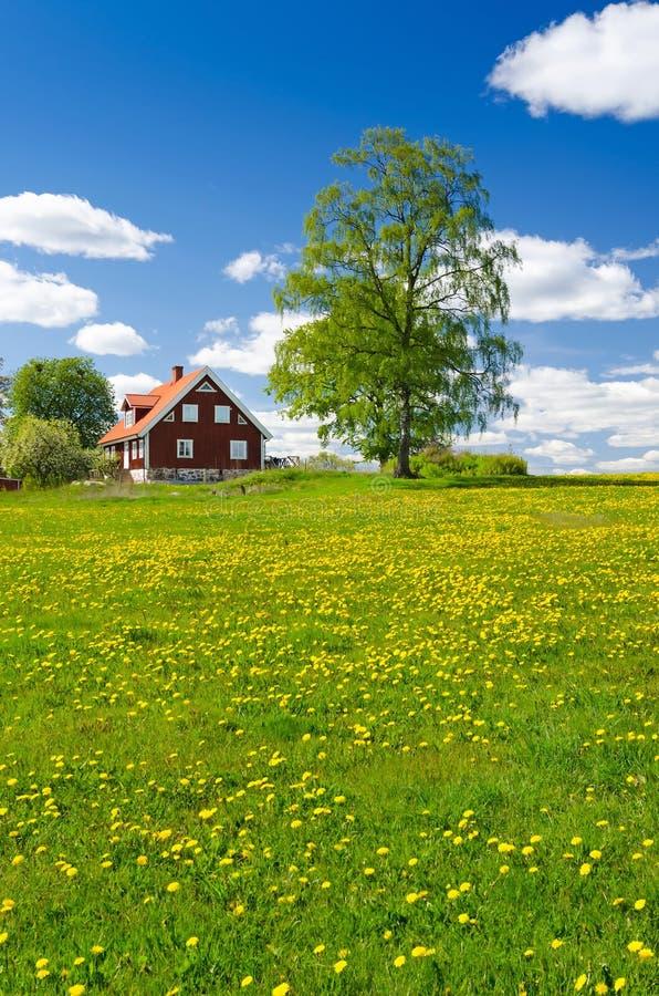 Vista vertical de la granja sueca en mayo fotografía de archivo libre de regalías