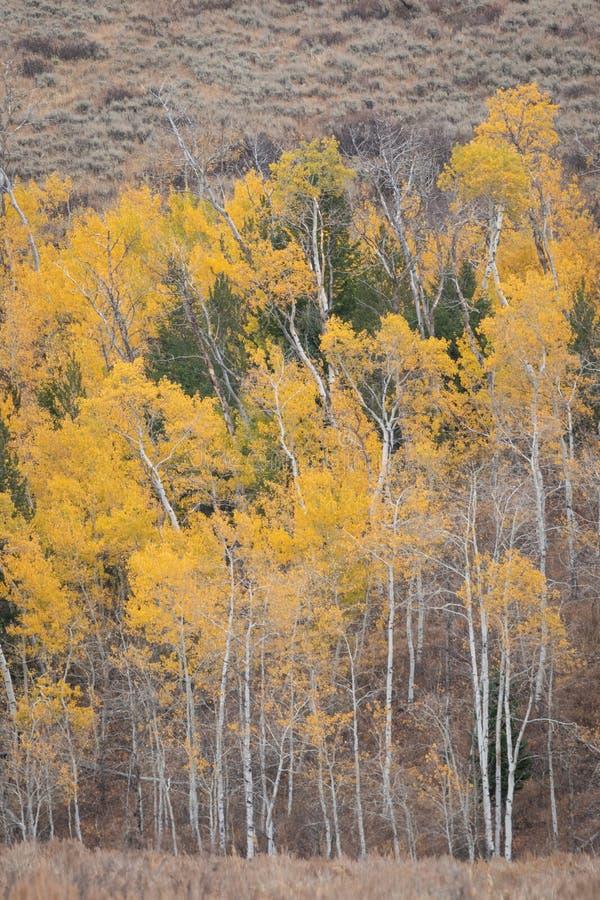 Vista vertical de uma montanha com cores da queda fotos de stock royalty free
