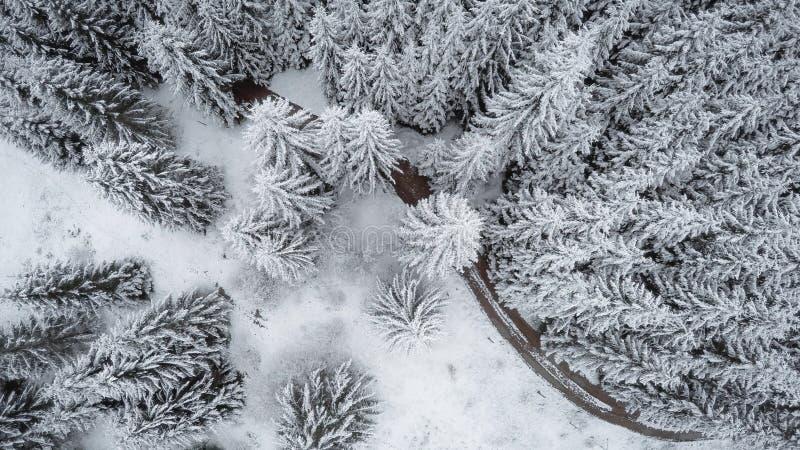 Vista vertical dos abetos vermelhos cobertos de neve fotografia de stock royalty free