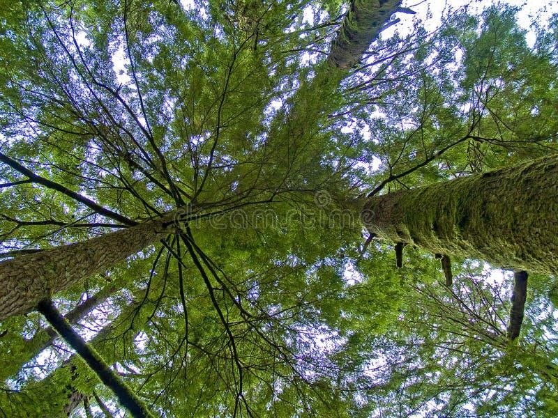 Vista vertical reta da floresta úmida imagem de stock