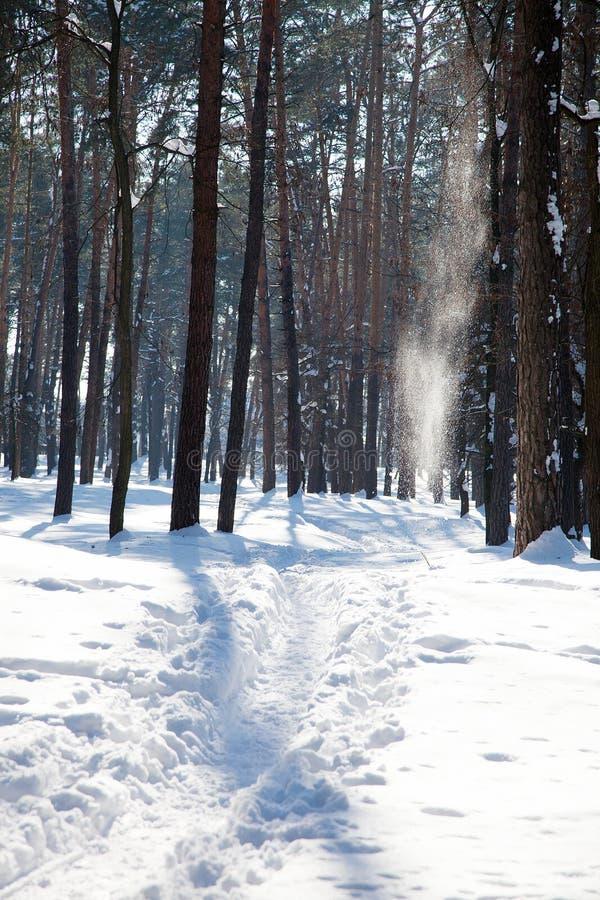 Vista verticale del sentiero per pedoni stretto nella foresta di inverno fotografie stock libere da diritti